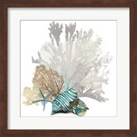 Framed Coral