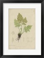Framed Roots
