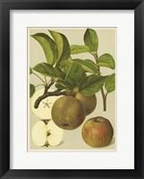 Framed Russet Apples I