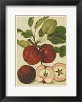 Framed Red Veli Apples II