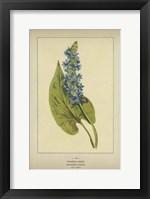 Framed Pickerel Weed