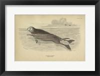 Framed Sea Otter
