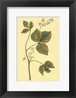 Framed Poison Ivy and Poison Oak