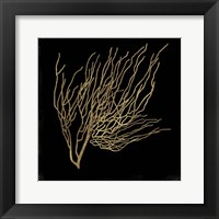 Framed Gold Coral I