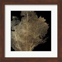 Framed Honeycomb Coral I