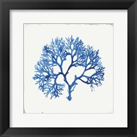Framed Blue and Green Coral V