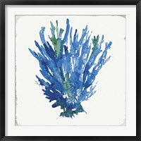 Framed Blue and Green Coral III