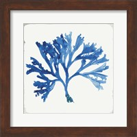Framed Blue and Green Coral IV