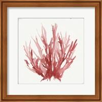 Framed Red Coral I