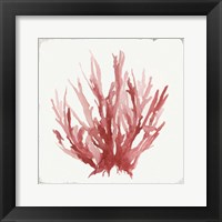 Framed Red Coral I