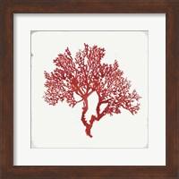 Framed Red Coral II