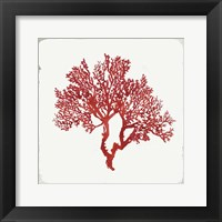 Framed Red Coral II