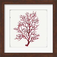 Framed Red Coral III