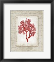 Framed Red Coral II Border