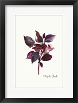Framed Purple Basil