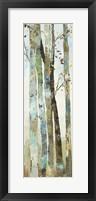 Framed Towering Trees I