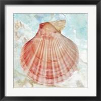 Framed Pink Shell