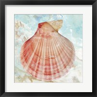 Framed Pink Shell