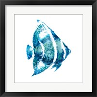 Framed Fish I