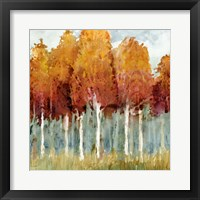 Framed Birch I