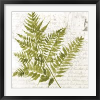 Framed Fern I