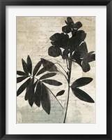 Framed Inky Floral II