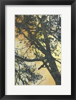 Framed Bubbly Branches