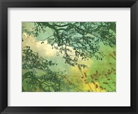 Framed Branches and Clouds