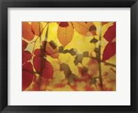 Framed Golden Foliage