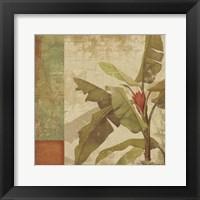 Framed Planta