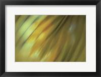 Tie Dye III Framed Print