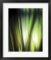 Framed Organic I