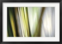 Framed Organic II