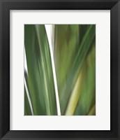 Framed Organic IV