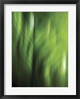 Framed Organic V