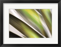 Framed Organic VI