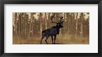 Framed Cold Pine