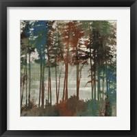 Framed Spruce Woods I