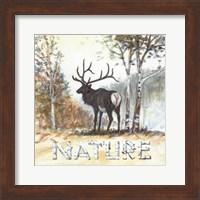 Framed Nature