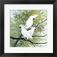 Framed Cockatoos