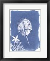Coastal Sea Life VI Framed Print