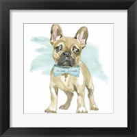 Framed Glamour Pups XI