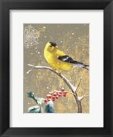 Framed Winter Birds Goldfinch Color