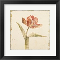 Framed Vintage Flaming Parrot Tulip Crop
