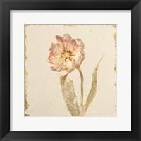 Framed Vintage May Wonder Tulip Crop