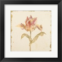 Framed Vintage Zoomer Schoon Tulip Crop