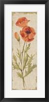 Framed Poppy Panel on White Vintage