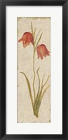 Framed Red Tulip Panel on White Vintage