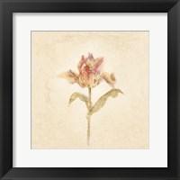 Framed Zoomer Schoon Tulip on White Crop