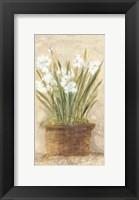 Framed Garden White Narcissus Panel